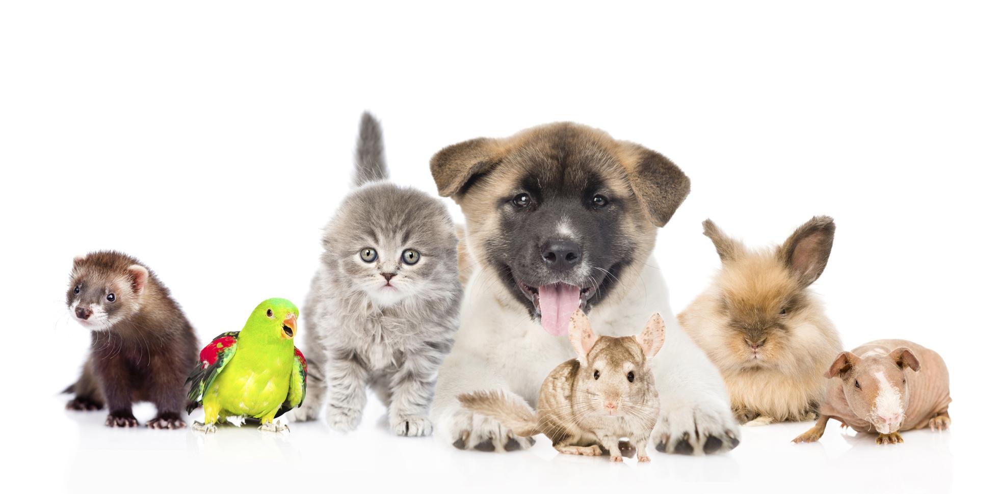 ペット保険の加入条件 犬・猫、フェレット 、ハムスター 、鳥 、うさぎ 、爬虫類