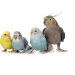 鳥のペット保険