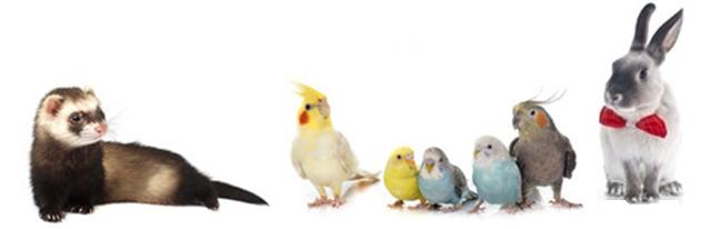 アニコム損保 どうぶつ健保ふぁみりぃ(鳥・うさぎ・フェレット用ペット保険) ペット保険比較 ペットグッチョイスTOP画像