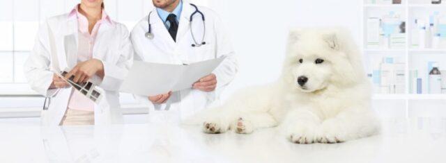 犬の病気・ケガ