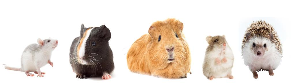 小動物のペット保険