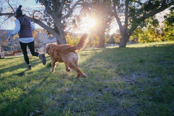 ペット保険の歴史
